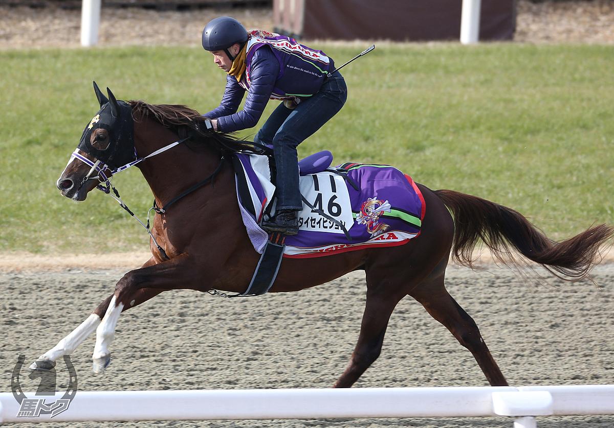 タイセイビジョンの馬体写真