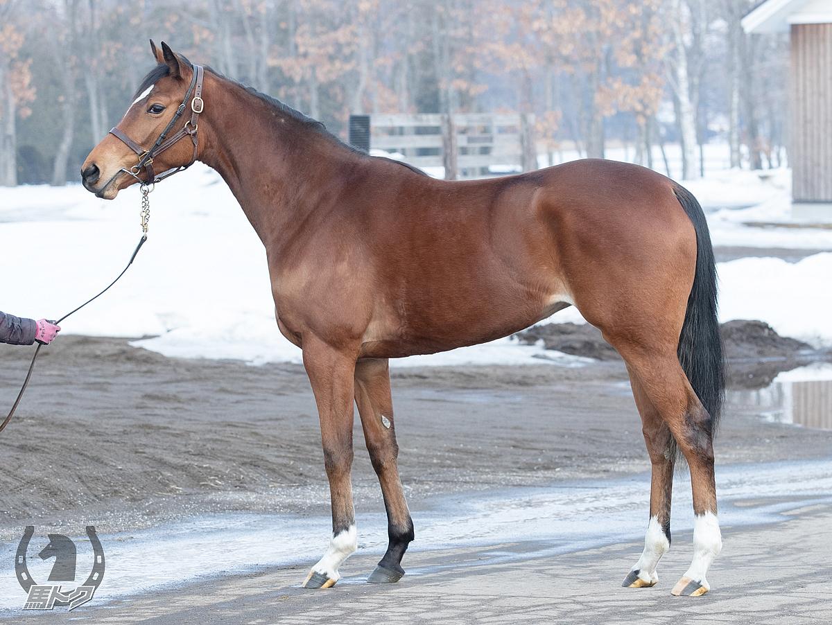 リーディングパートの馬体写真