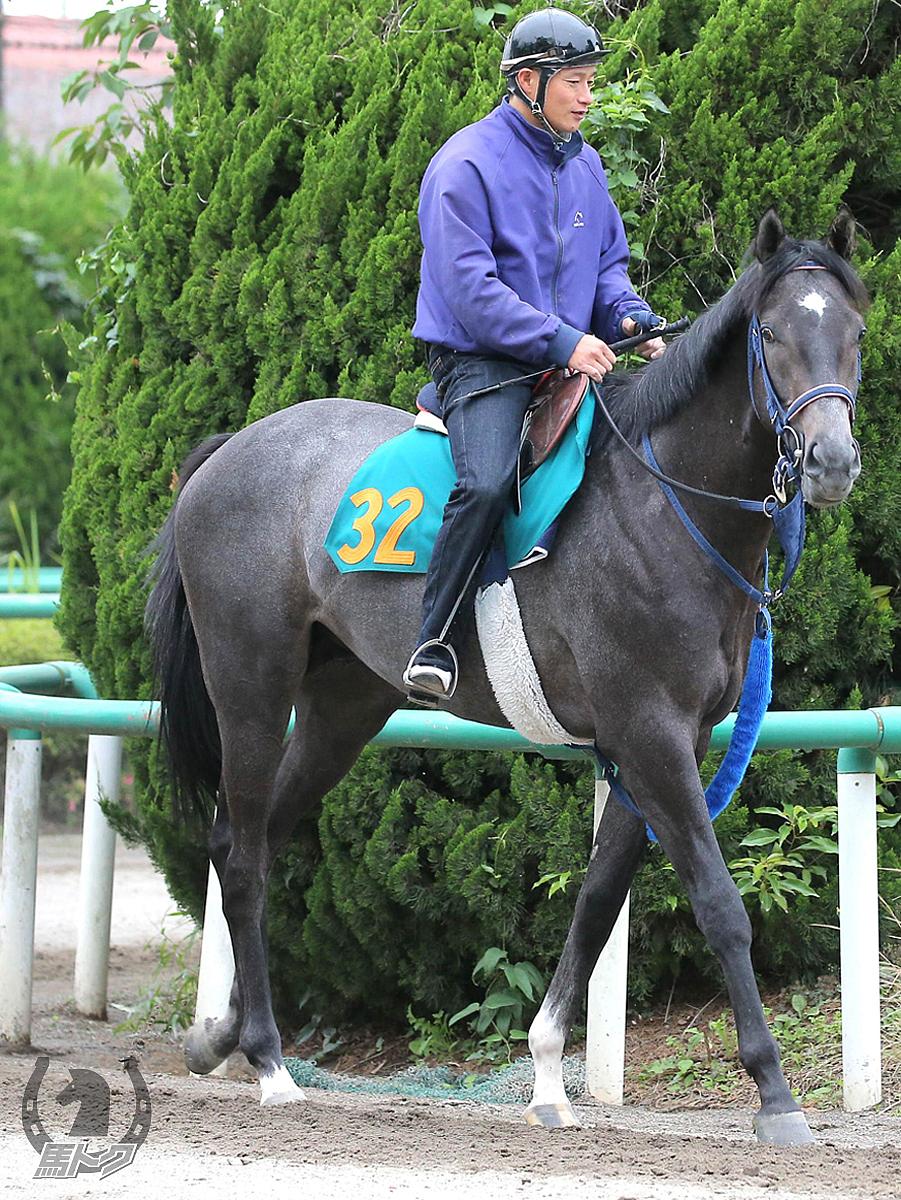 ブルトガングの馬体写真