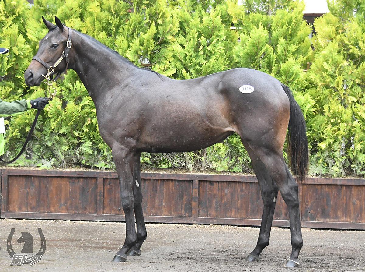 シーハーハーの馬体写真