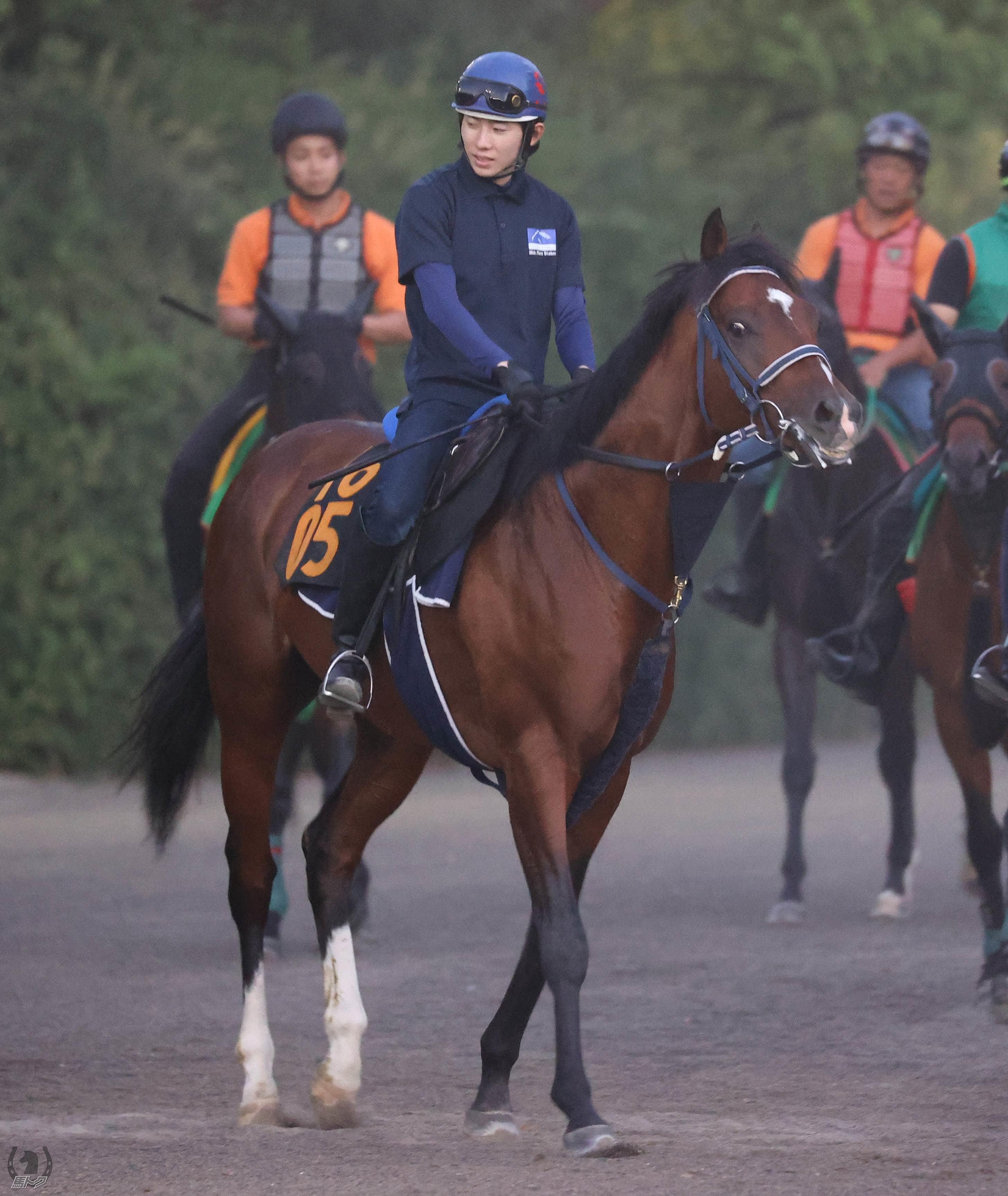 ワーケアの馬体写真
