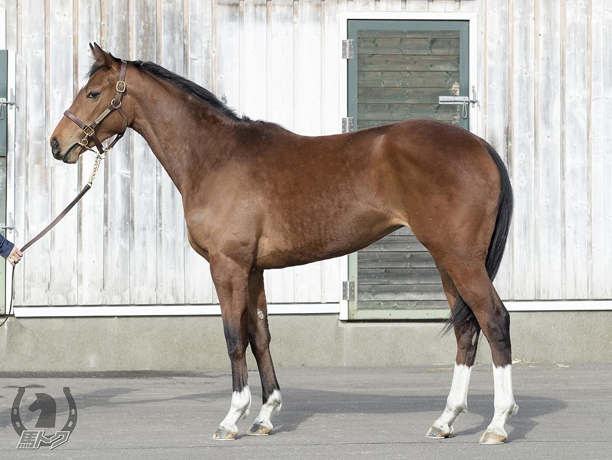 レッドマリアベールの馬体写真