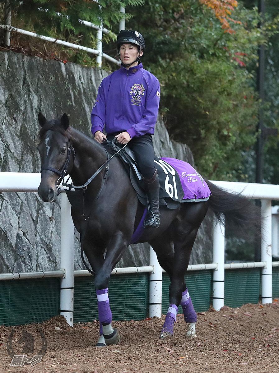マイラプソディの馬体写真