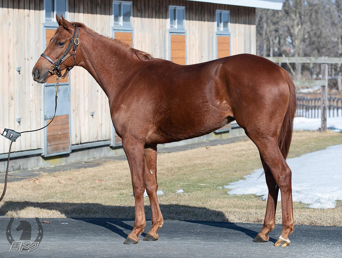 ケリーズアリュールの馬体写真