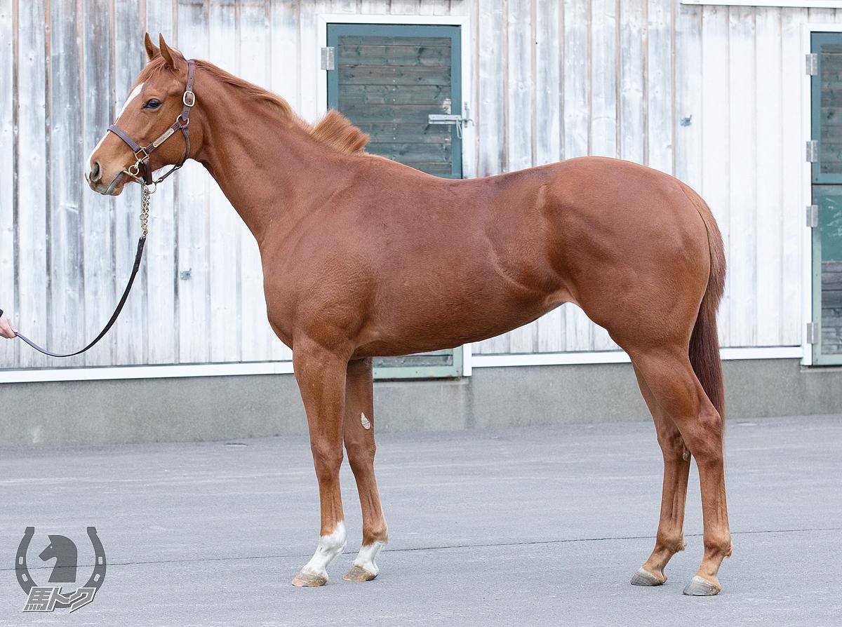 プランドルアンテの馬体写真