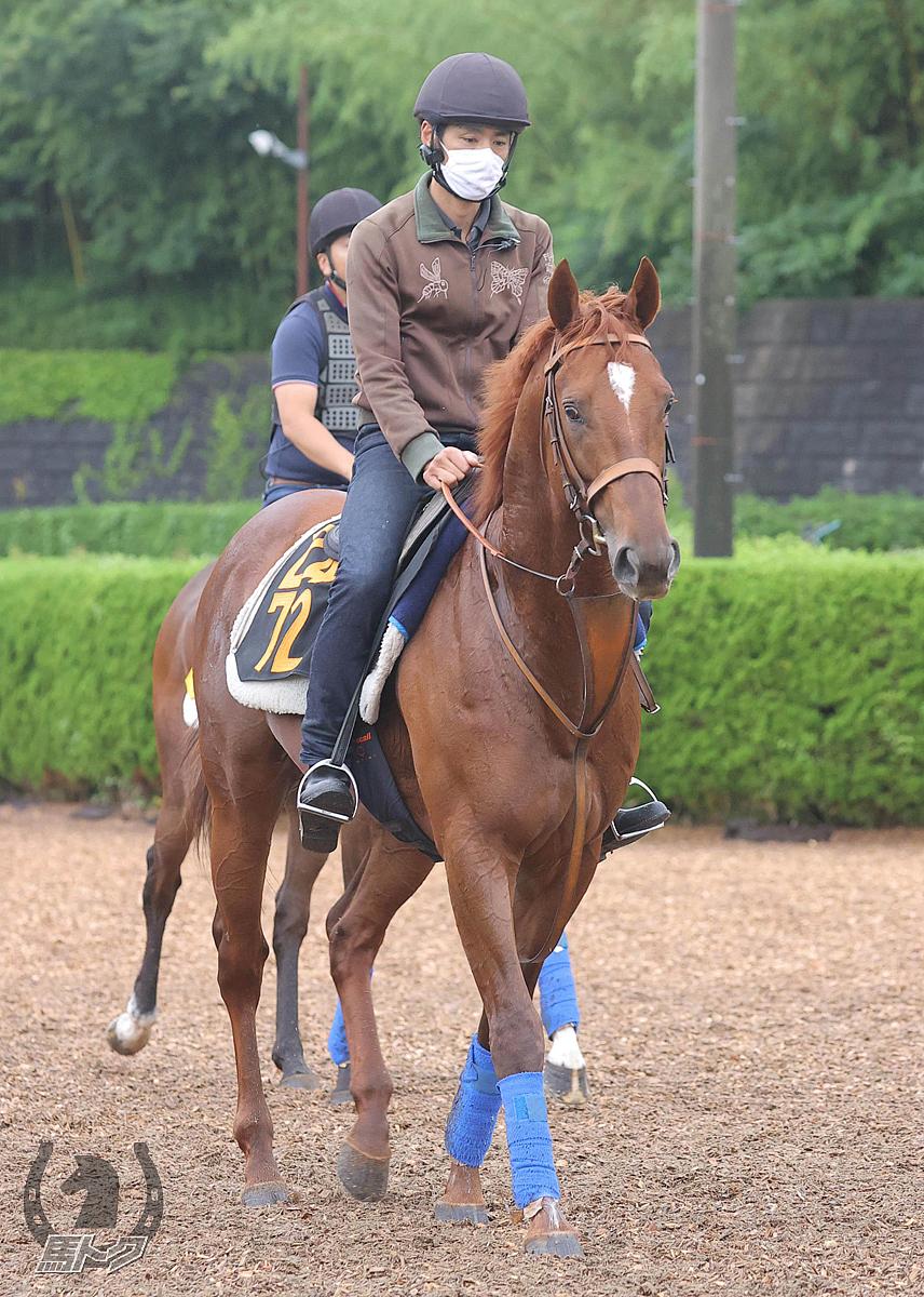 グレイトオーサーの馬体写真