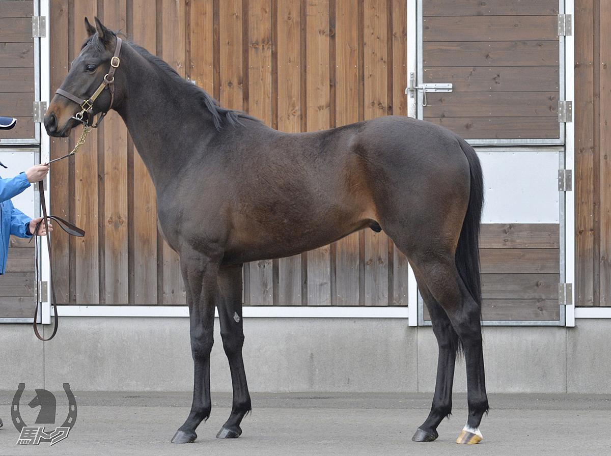 キングサーガの馬体写真