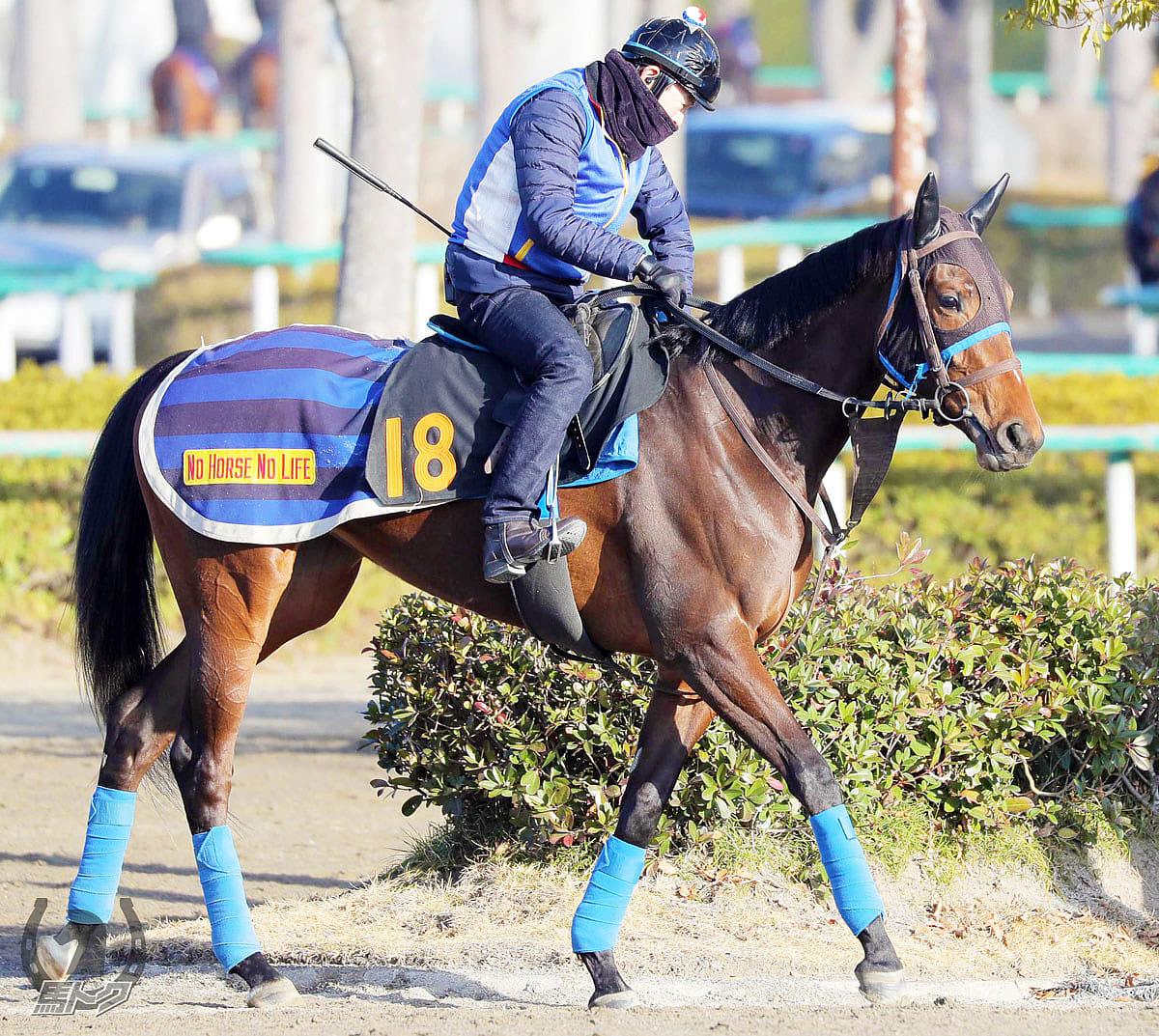 アカノニジュウイチの馬体写真