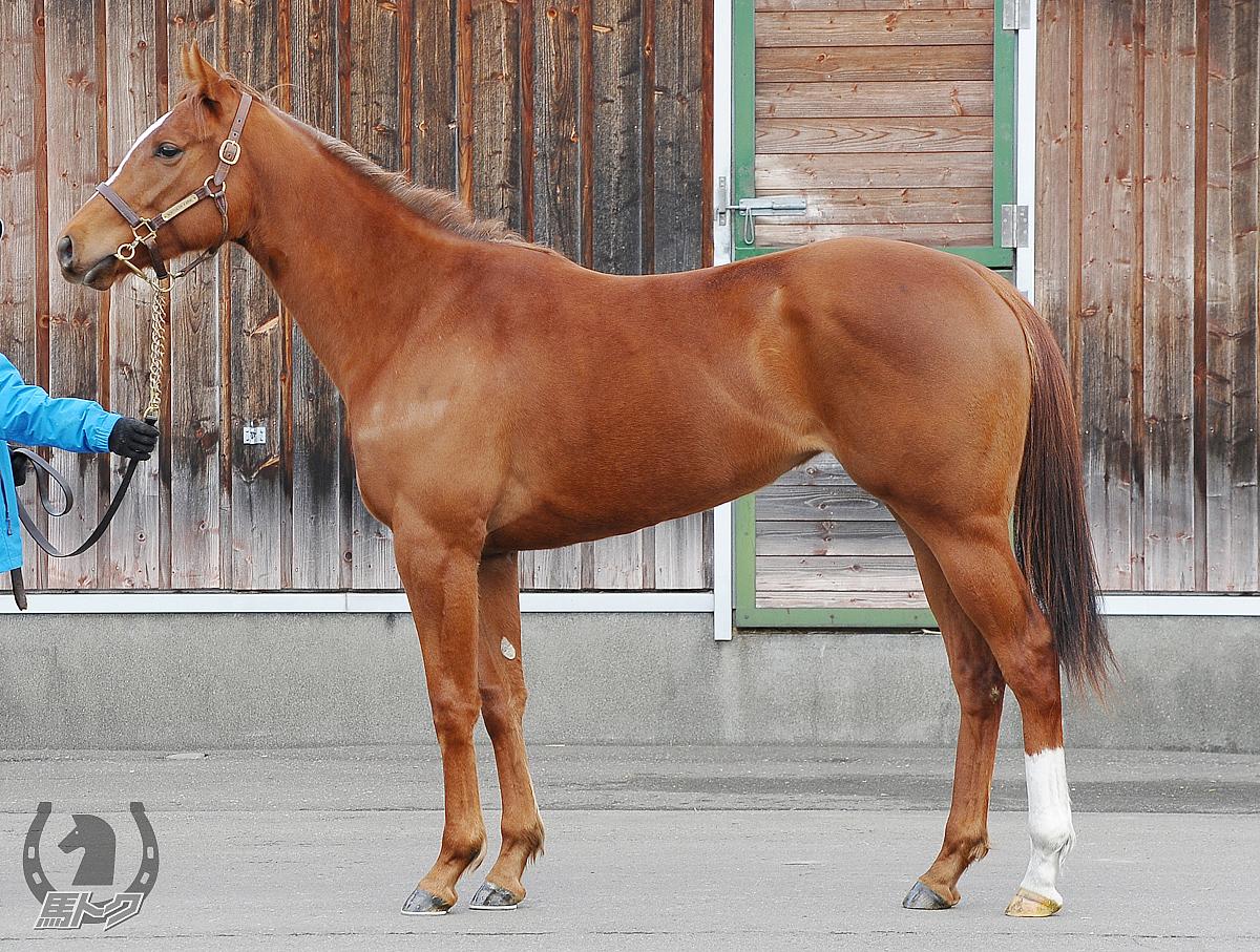 プリマグラードの馬体写真