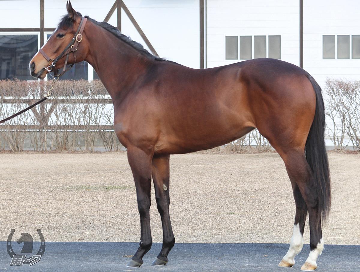 ヒメノカリスの馬体写真