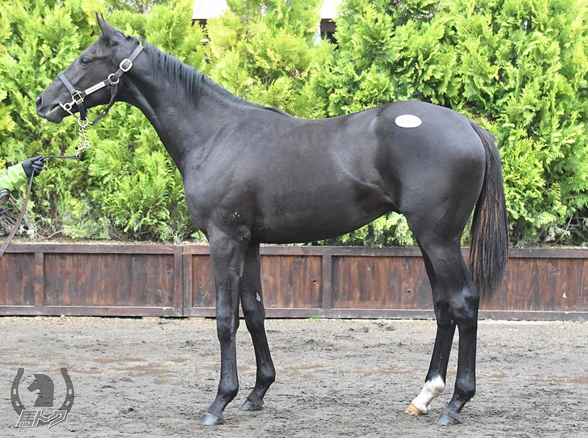 ブラックマジックの馬体写真