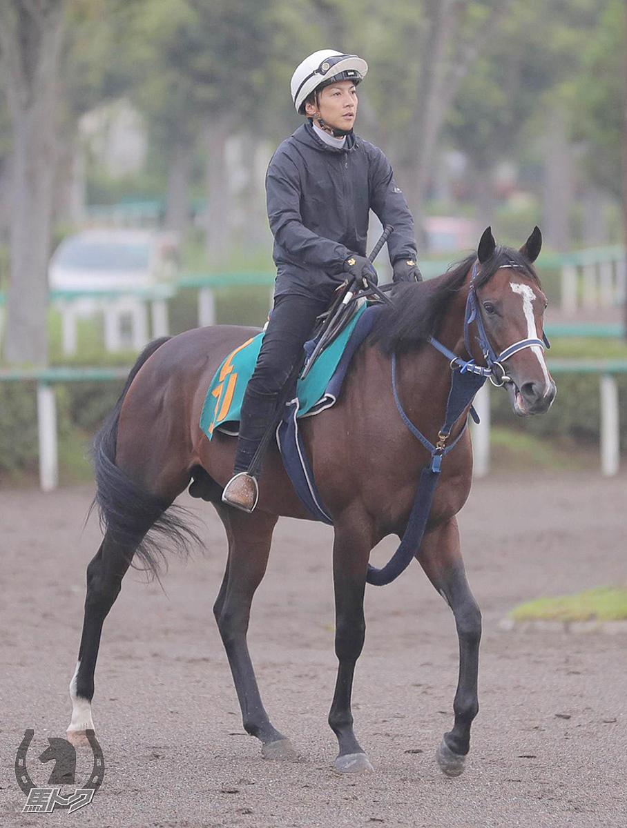 タイムマシンの馬体写真