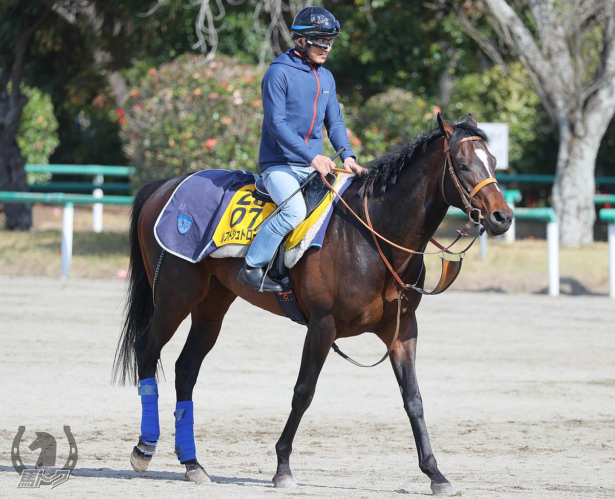 ルフトシュトロームの馬体写真