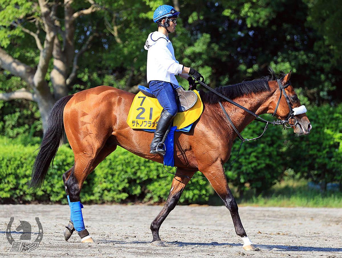 サトノフラッグの馬体写真