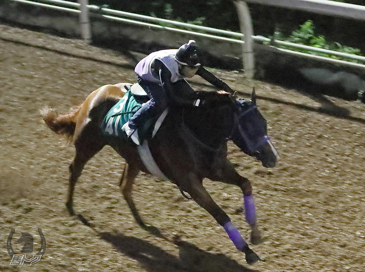 グランドデュークの馬体写真