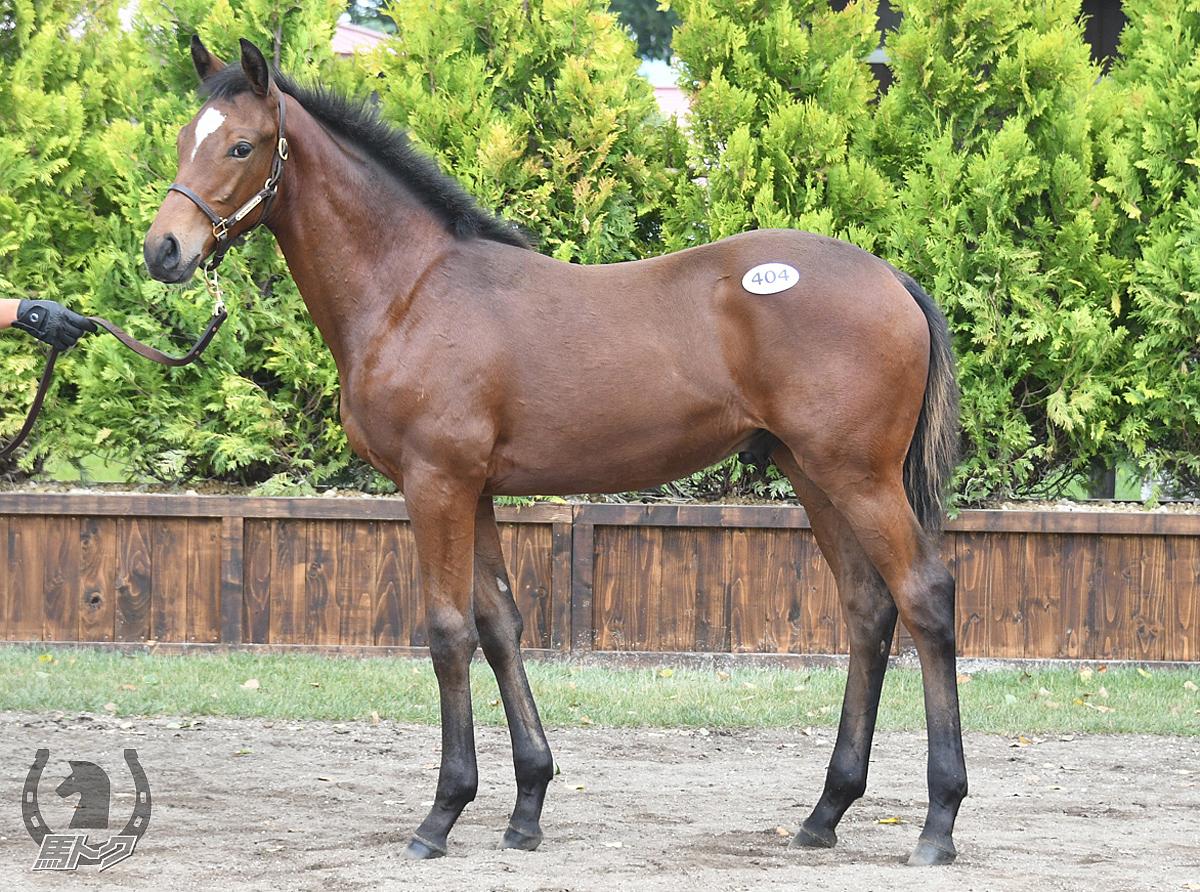 グランドジュビリーの馬体写真