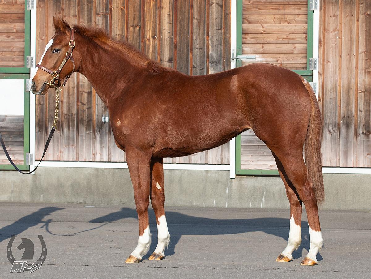 デイトラインの馬体写真