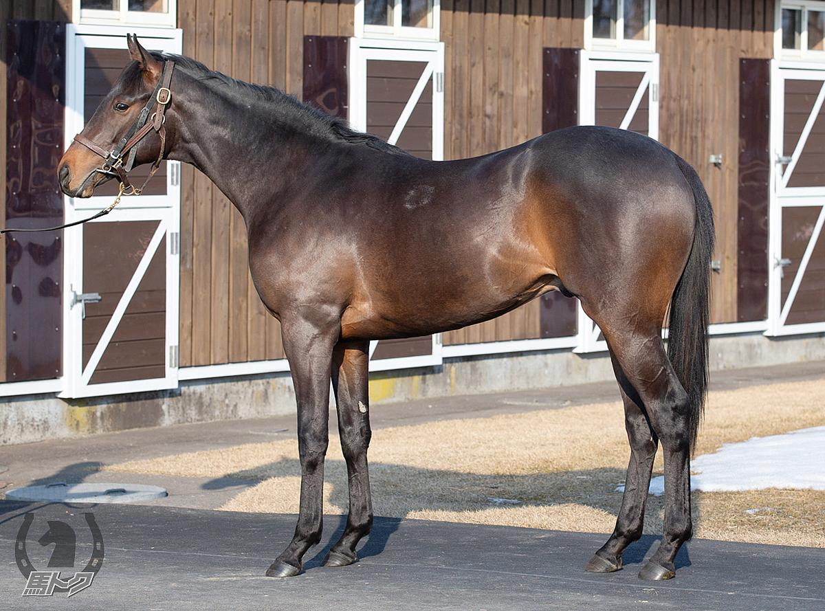 パーフェクトルールの馬体写真