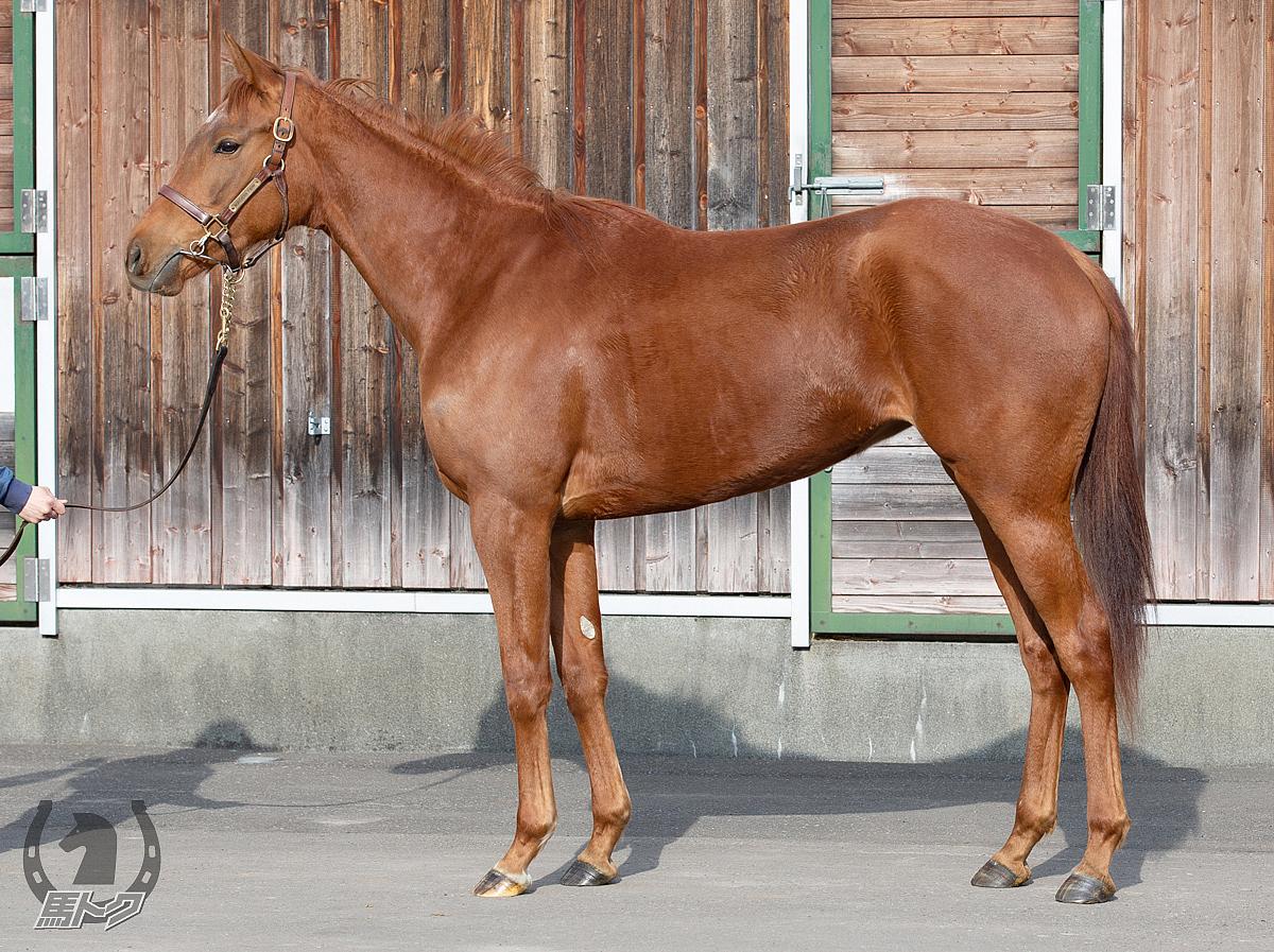 フレジエの馬体写真