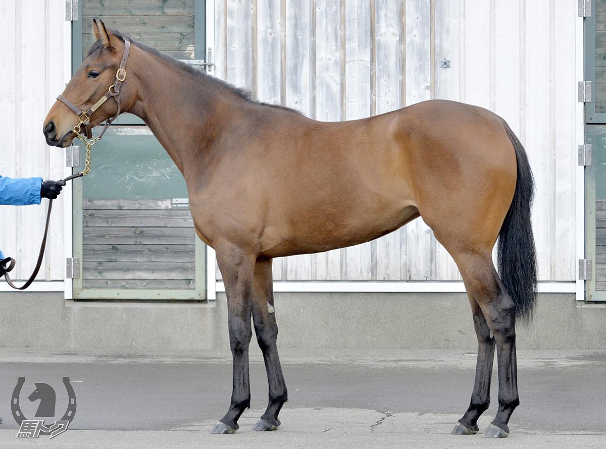 ゴールドティアの馬体写真