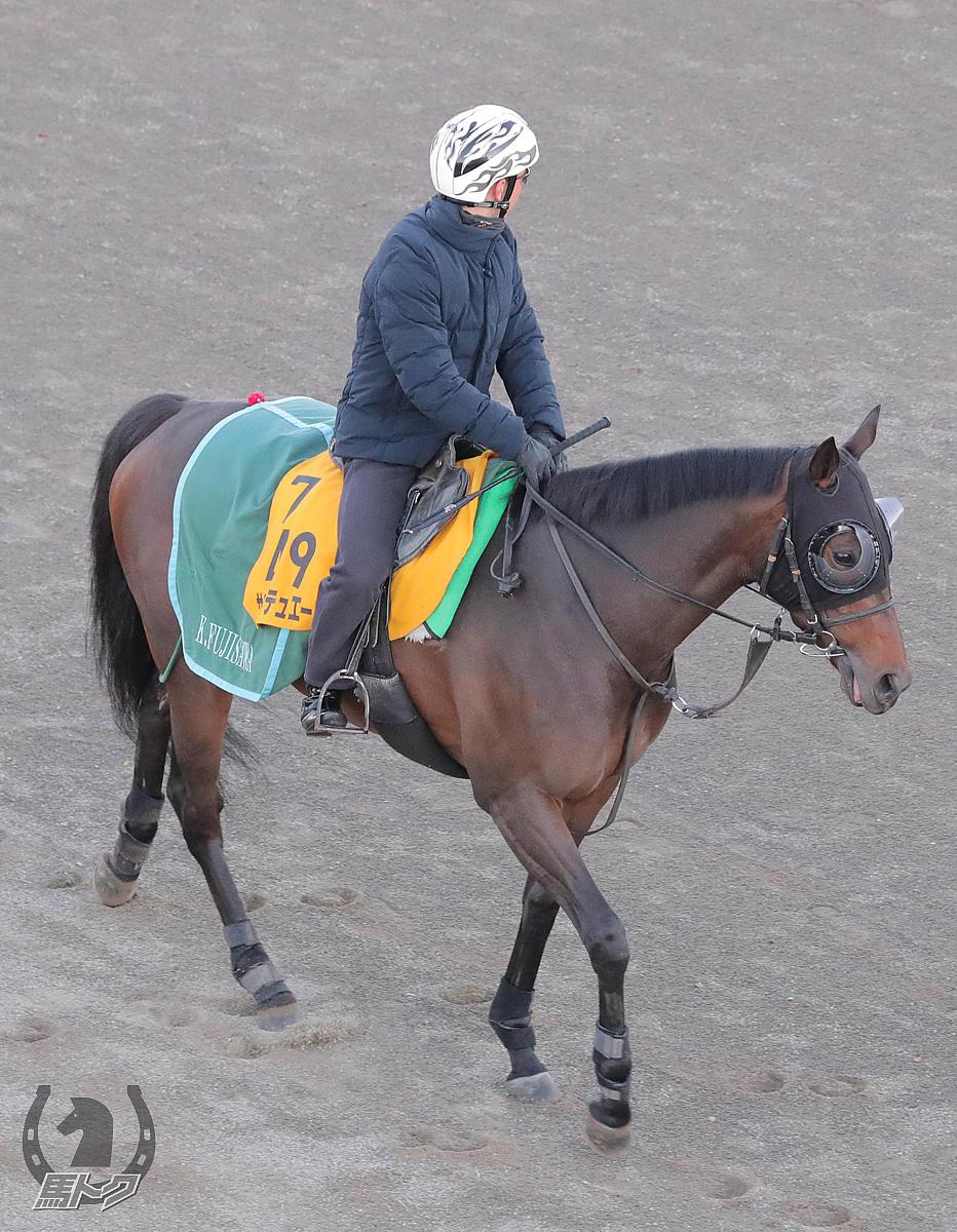 サンクテュエールの馬体写真