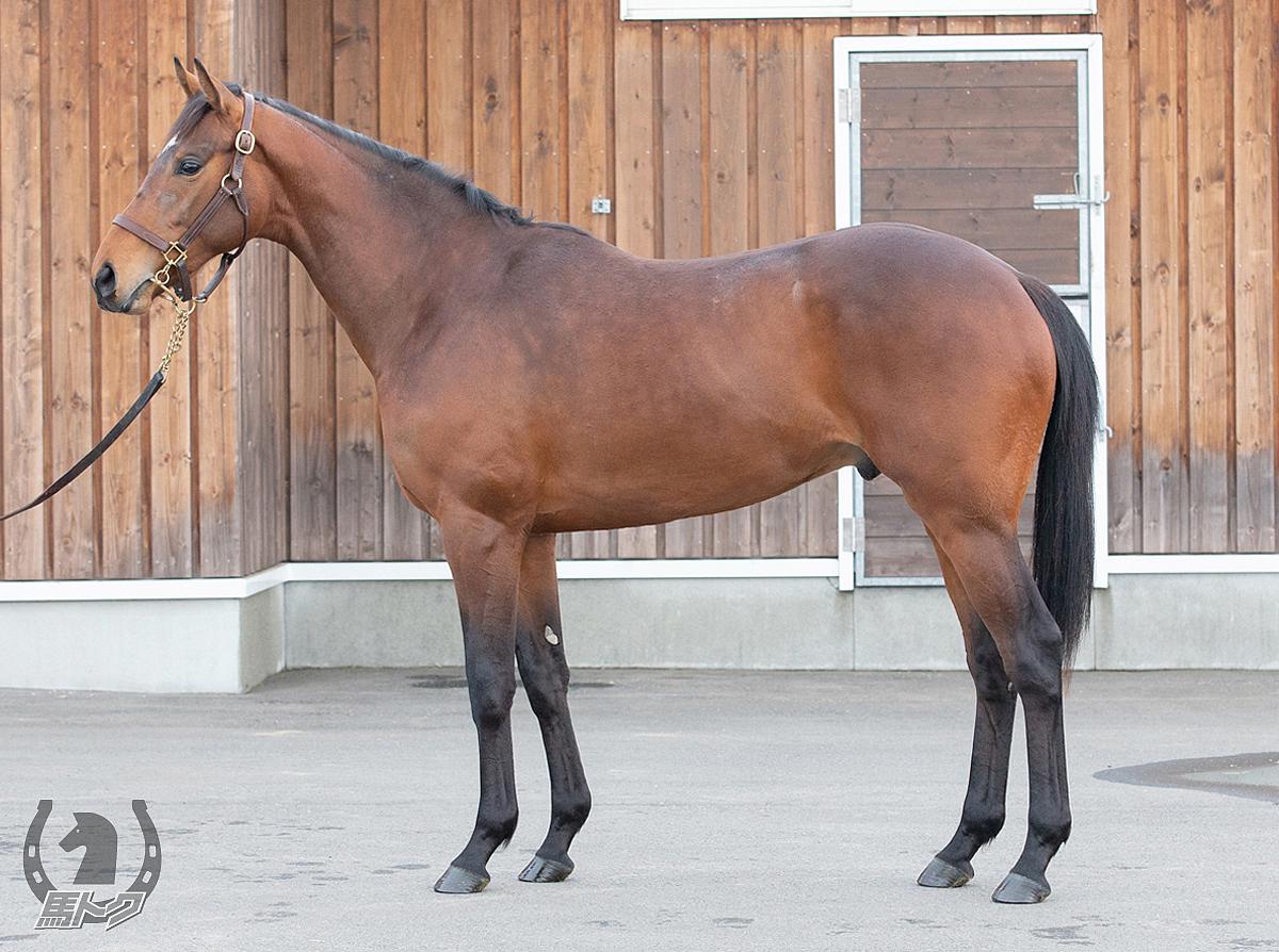 ルヴァンの馬体写真