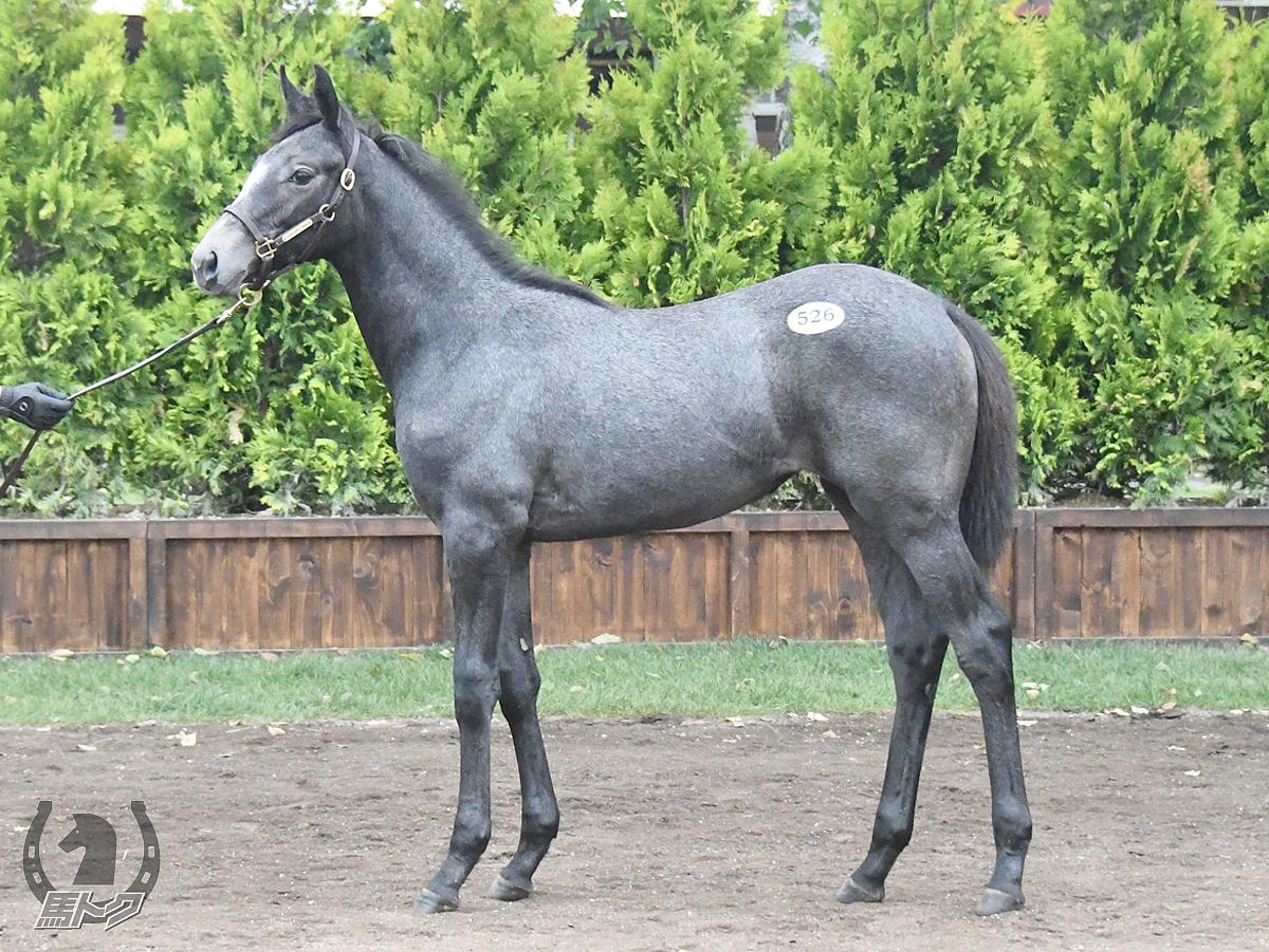 アドマイヤミランダの馬体写真