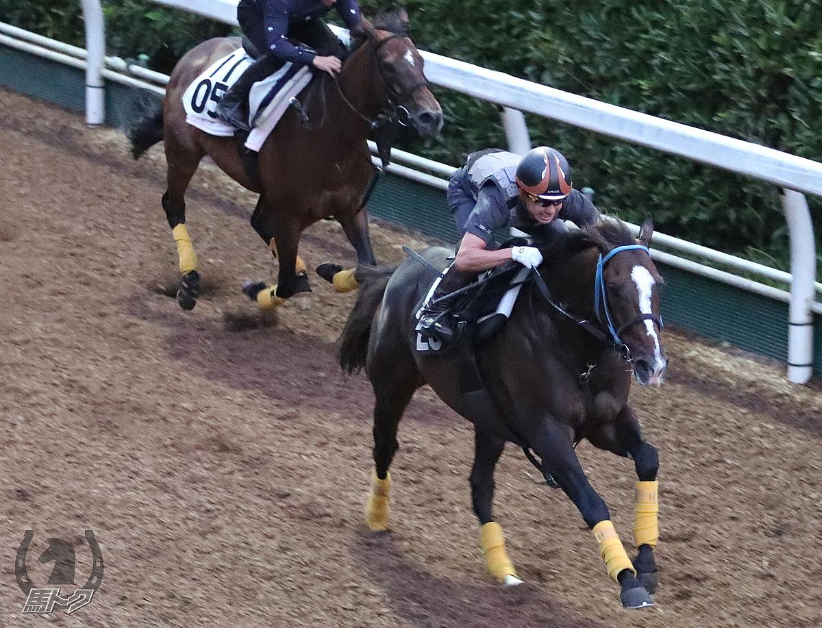 ラインハイトの馬体写真