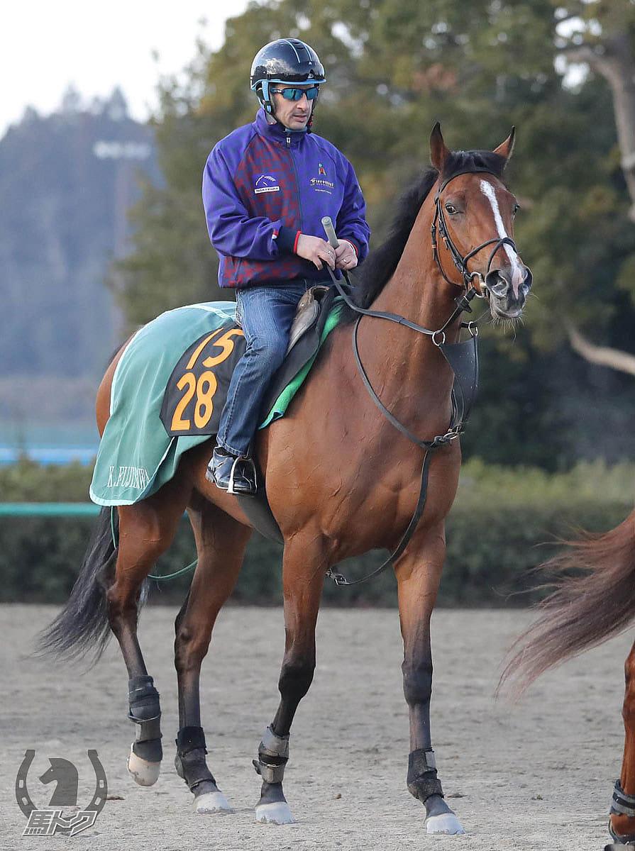 ルナシオンの馬体写真