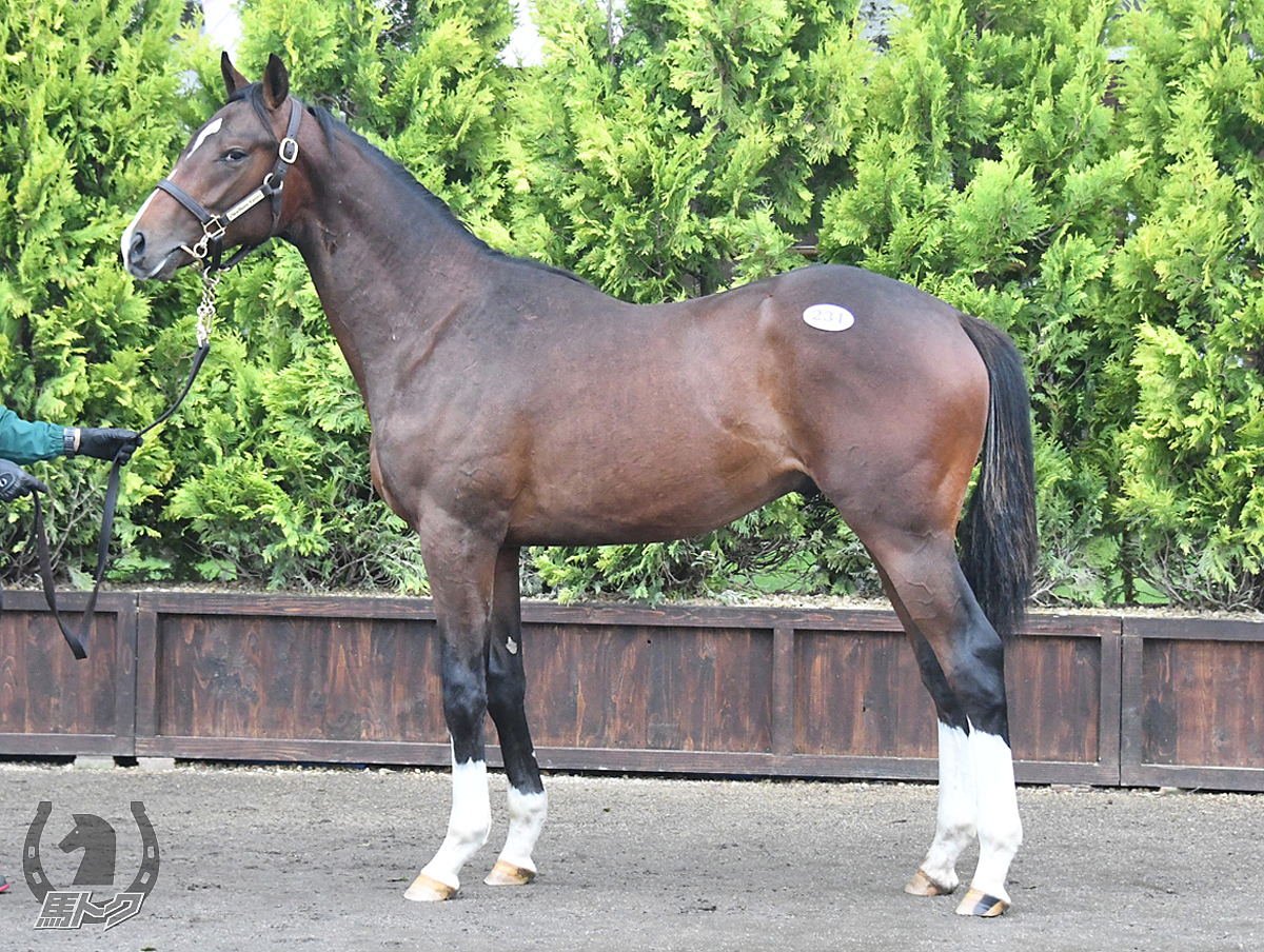 ミナトの馬体写真