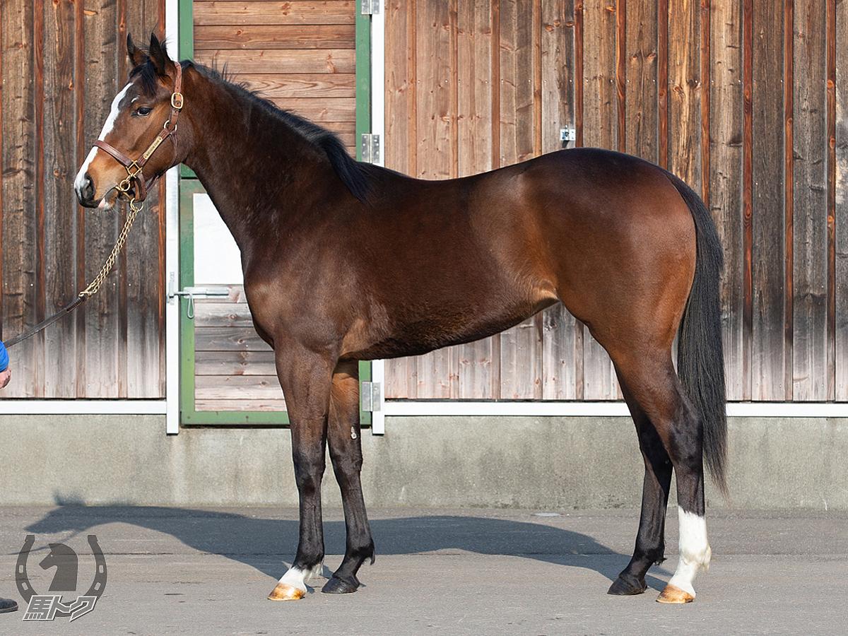 ヴァルキュリアの馬体写真