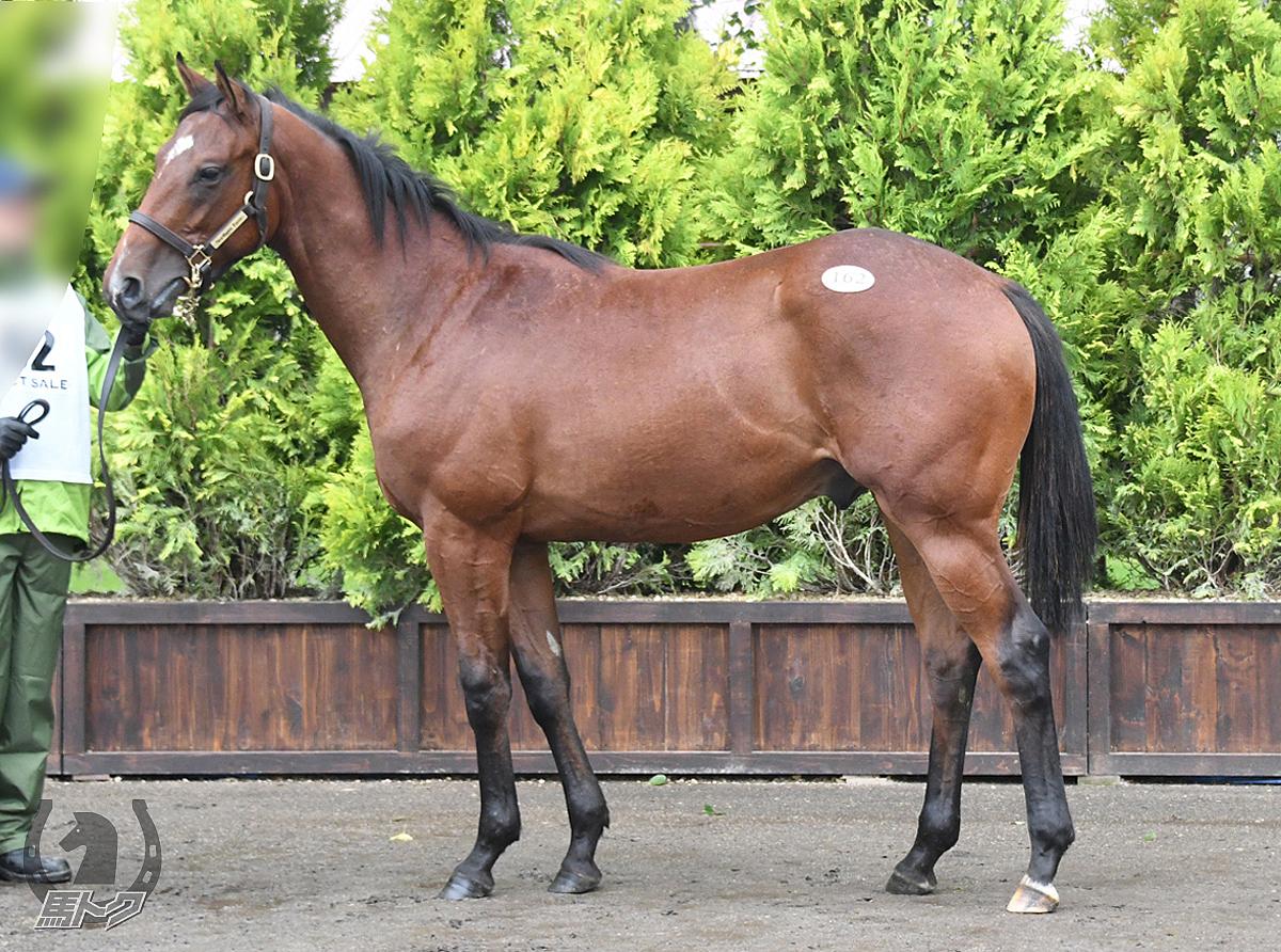 キャルハーフムーンの馬体写真