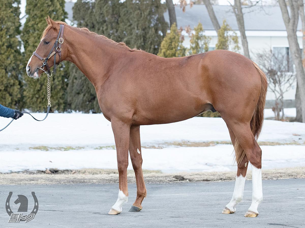 トラモントの馬体写真