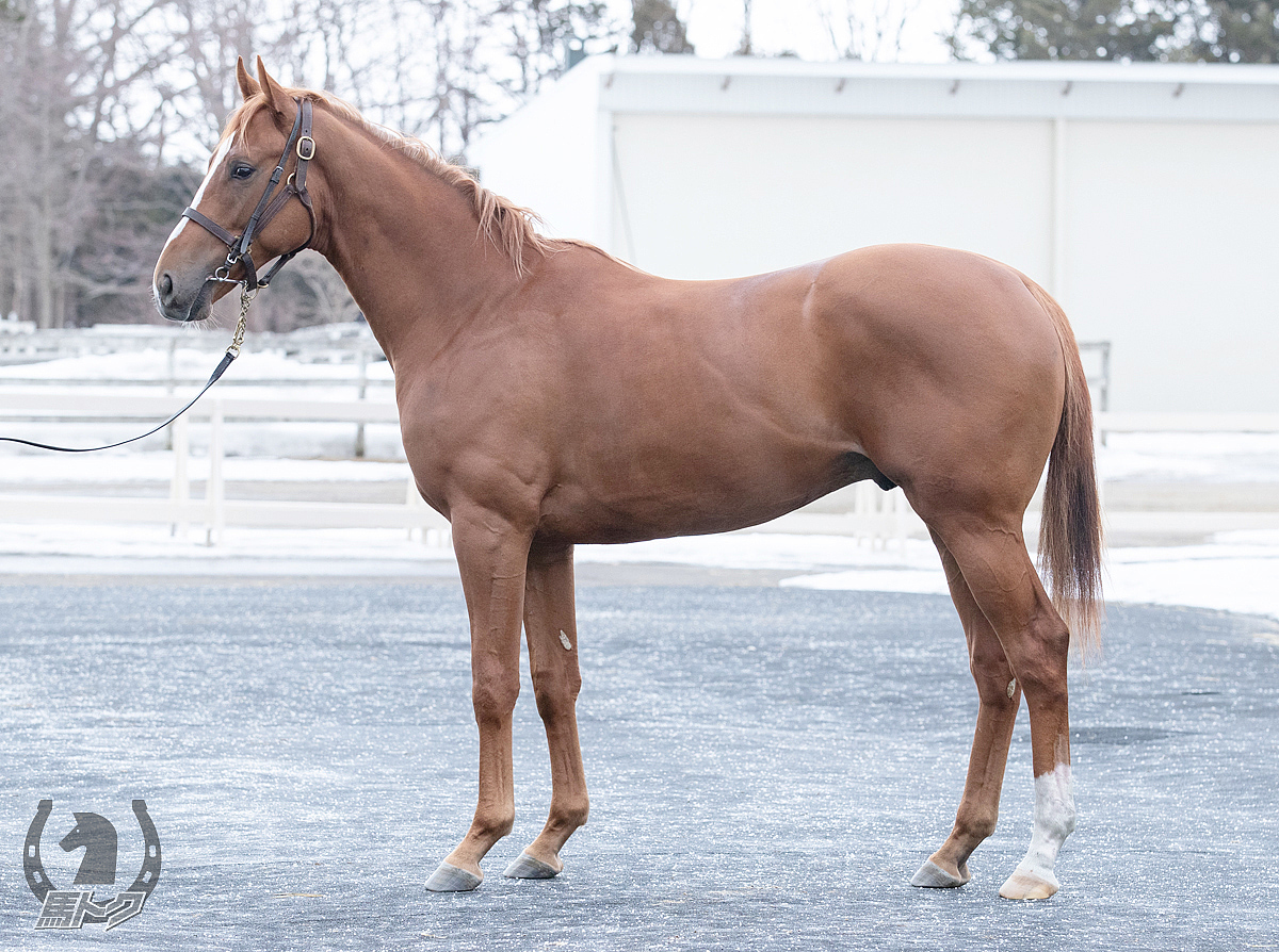 サンテルノの馬体写真