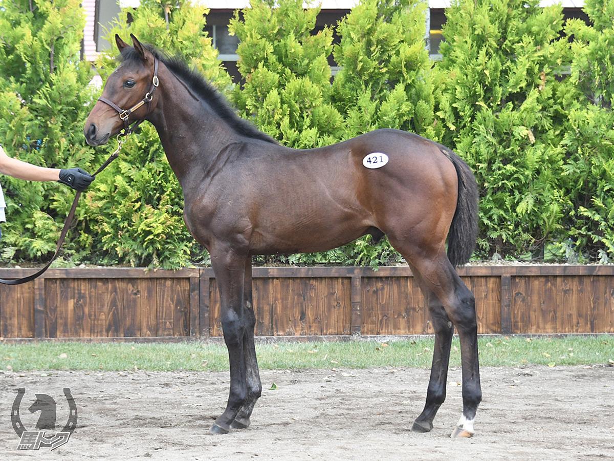 サトノエスペランサの馬体写真