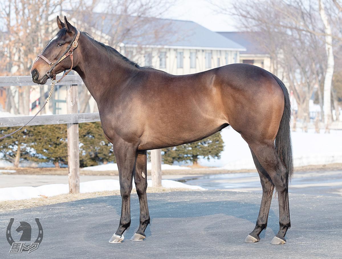 フロイデンベルクの馬体写真