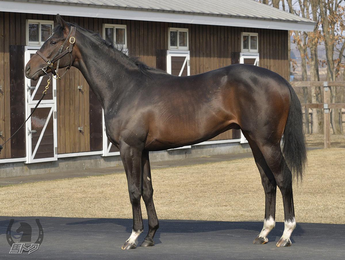テイルウォークの馬体写真