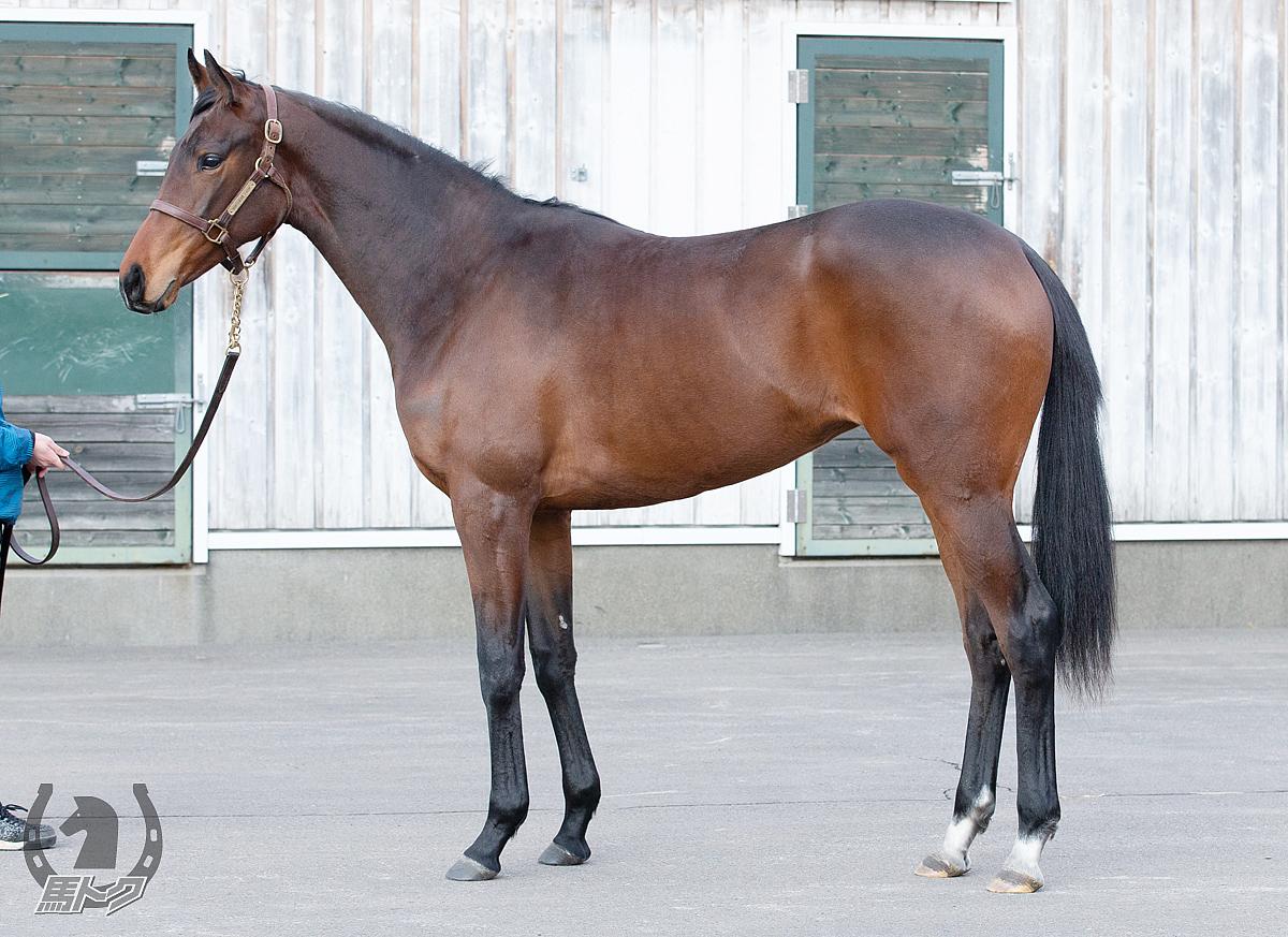 アトリビュートの馬体写真