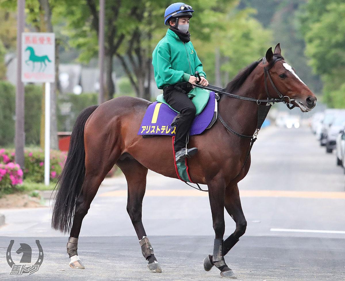 アリストテレスの馬体写真
