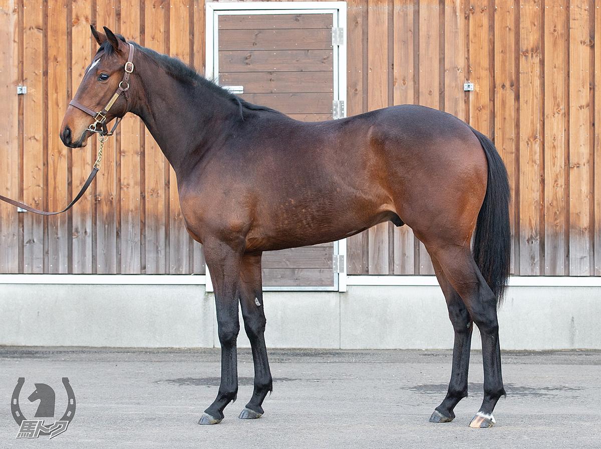 アイスジェイドの馬体写真
