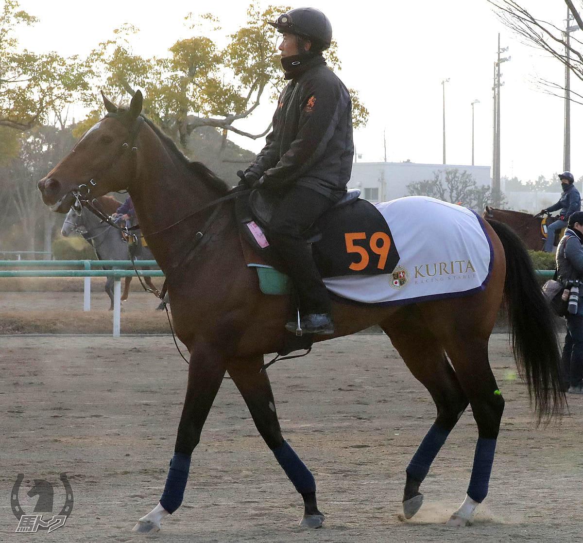 アミークスの馬体写真