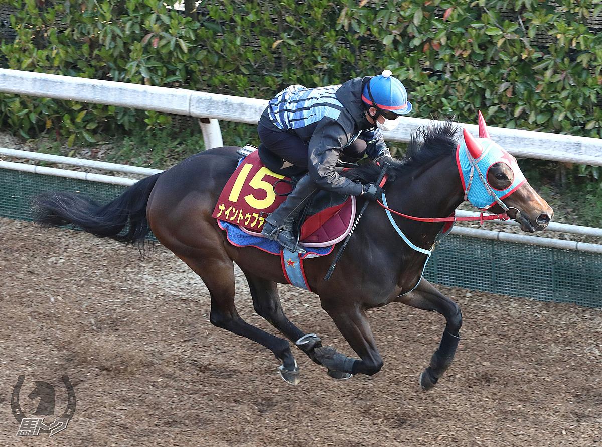 ナイントゥファイブの馬体写真