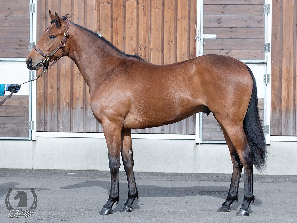 ベッロコルサの馬体写真