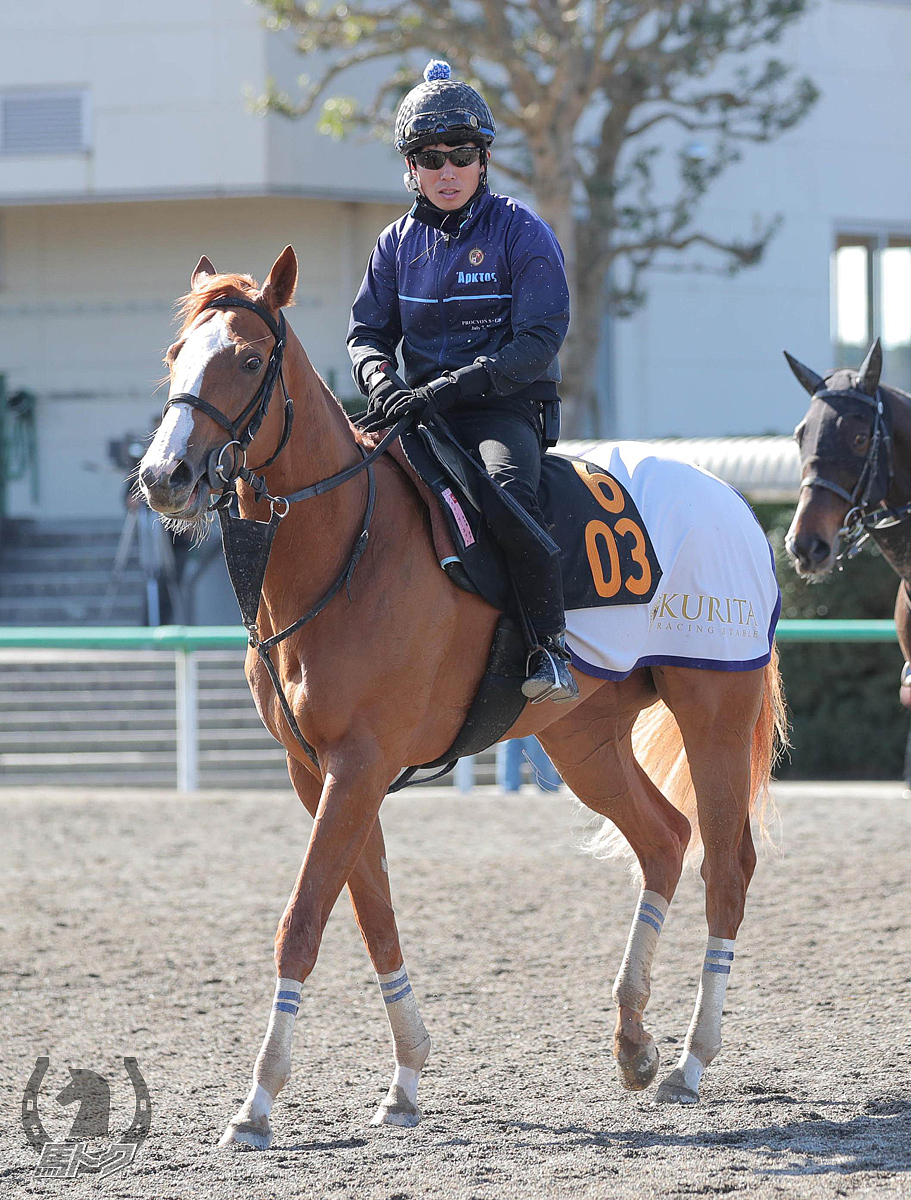 シャインガーネットの馬体写真