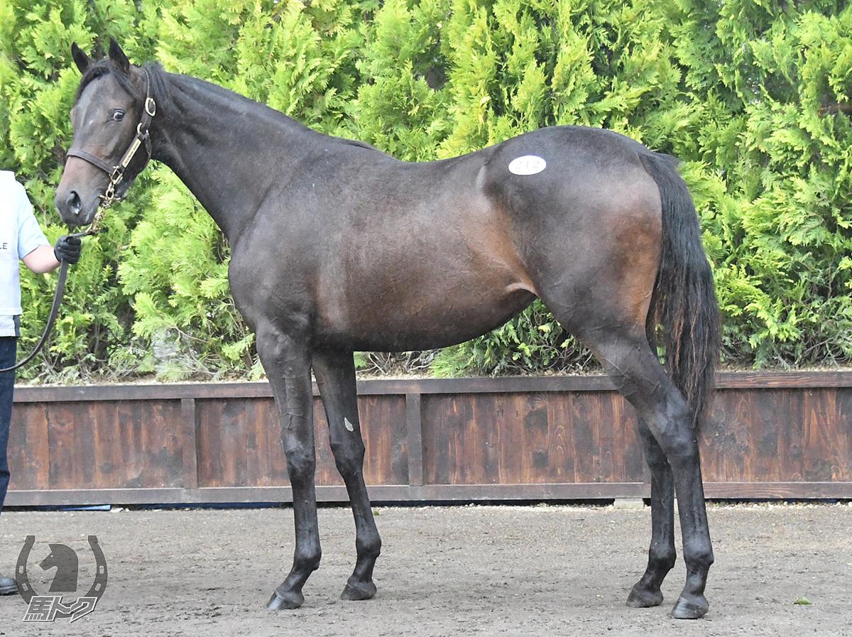 ジュンヴァドスの馬体写真