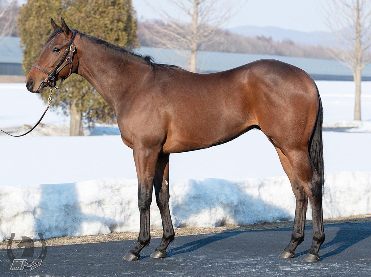 バンデアミールの馬体写真