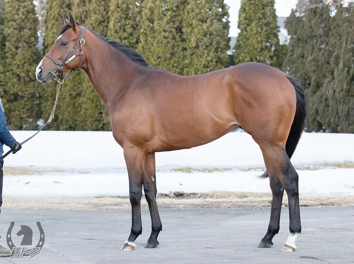 ハーツクリスタルの馬体写真
