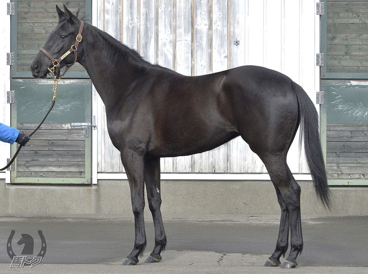 アドマイヤチャチャの馬体写真