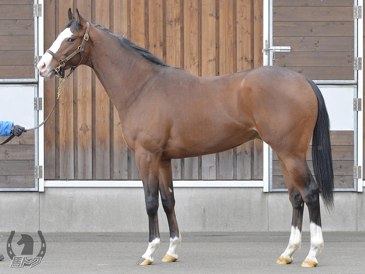 ブリジャールの馬体写真