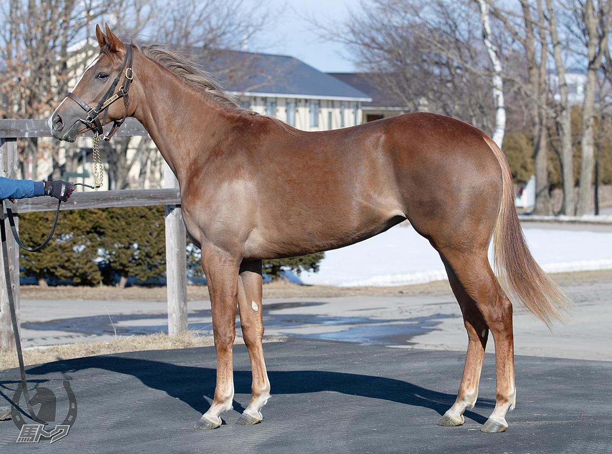 ロマーシカの馬体写真
